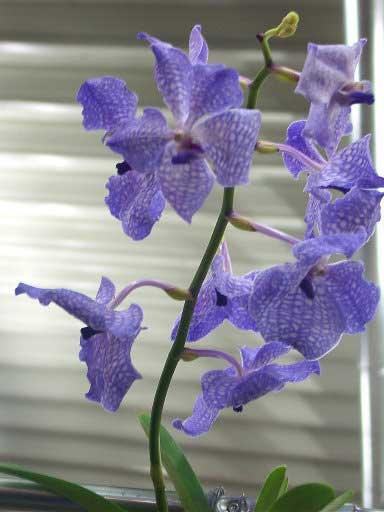 Выставка орхидей в Дрездене.